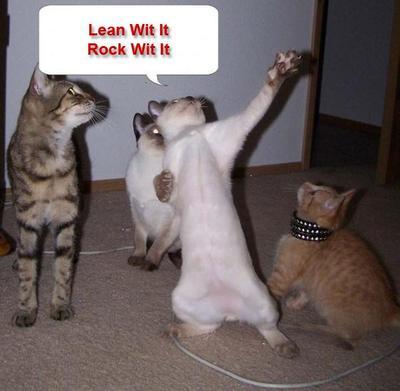 funny cats comment pics coolspacetricks com myspace layouts