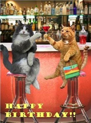 cats happy birthday drinks