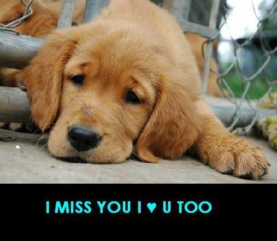 I Miss You I Love U Too