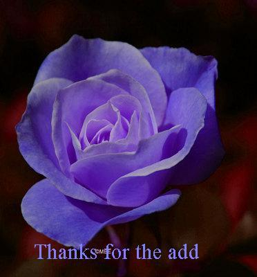 Thanks For The Add  Blue Rose