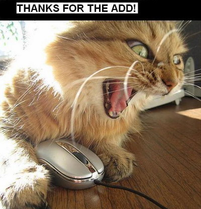 Thanks For The Add! Funny Cat